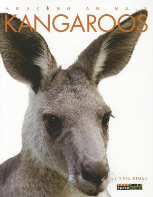 Kangaroos By Riggs, Kate